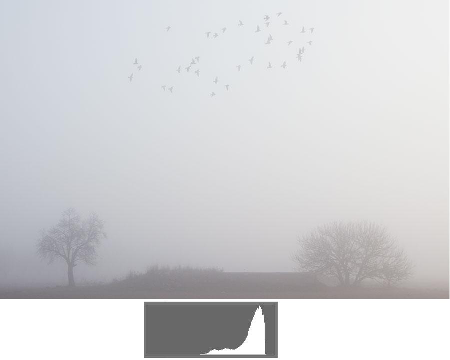 Ejemplo fotografía con valores altos en el histograma, pero que no está sobreexpuesta