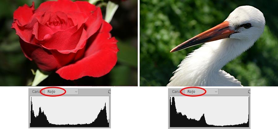 El canal rojo es muy distinto en estas fotografías