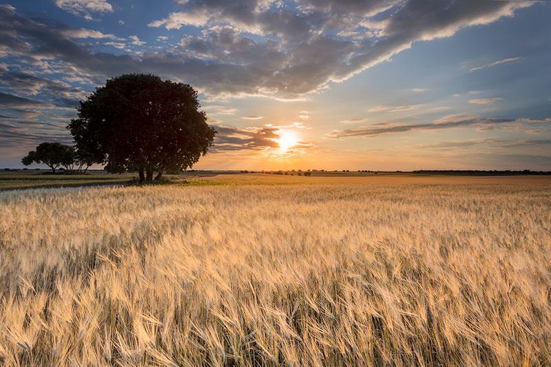 fotografía de paisaje, atardecer y siembra