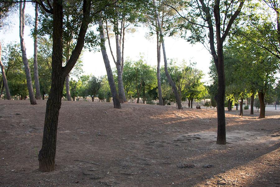 Fotografía al atardecer en un parque