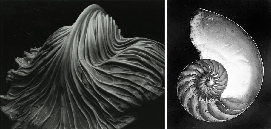 Edward Weston, fotografías elementos naturales