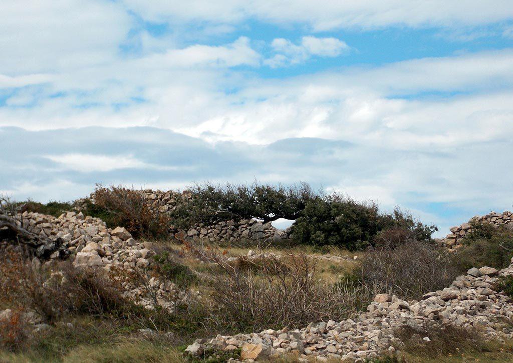 Ejemplo de fotografía de paisaje abigarrada