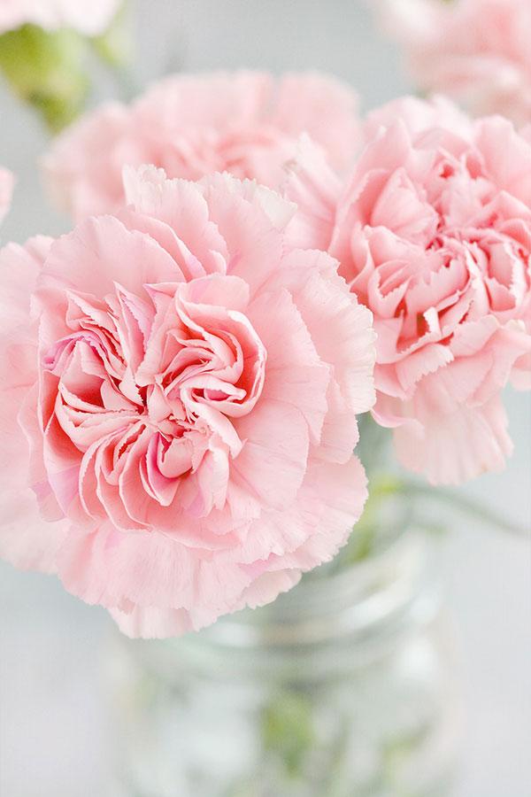Flores de tonos claros con abundante iluminación