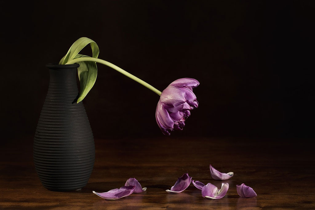 Flores con colores oscuros