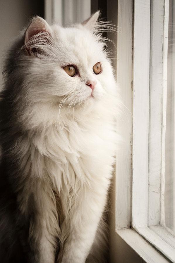 Retrato de un gato en la ventana, con luz natural