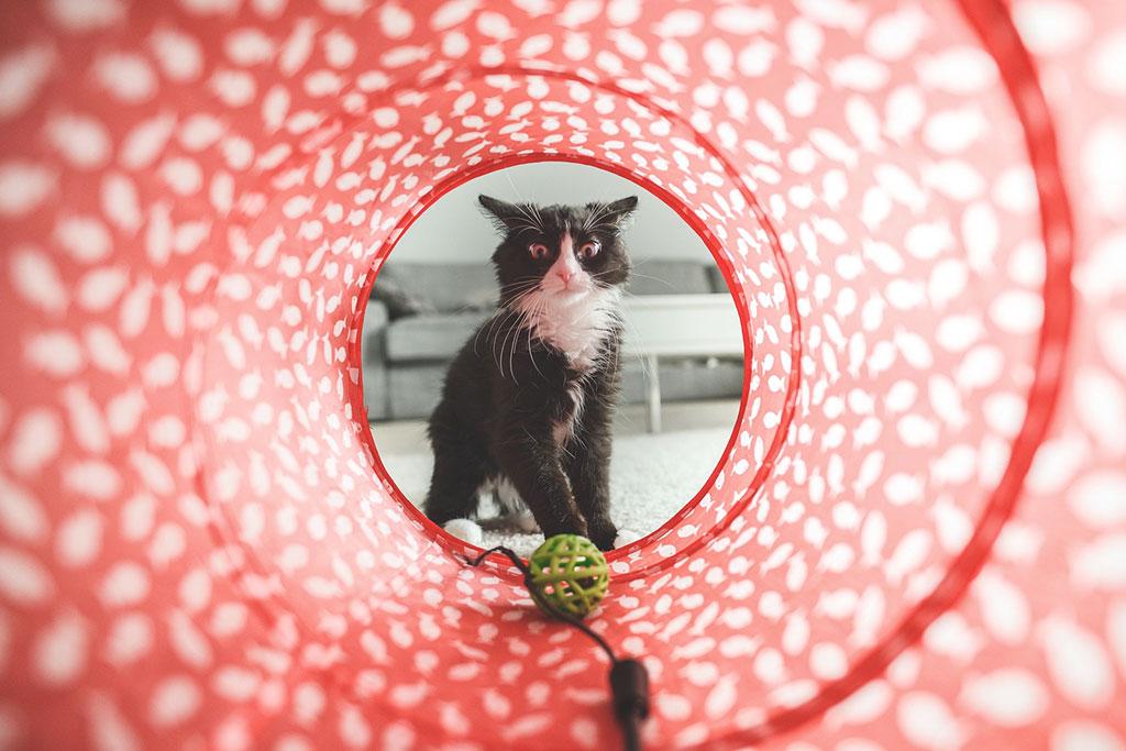 Retrato creativo de un gato, con buena composición