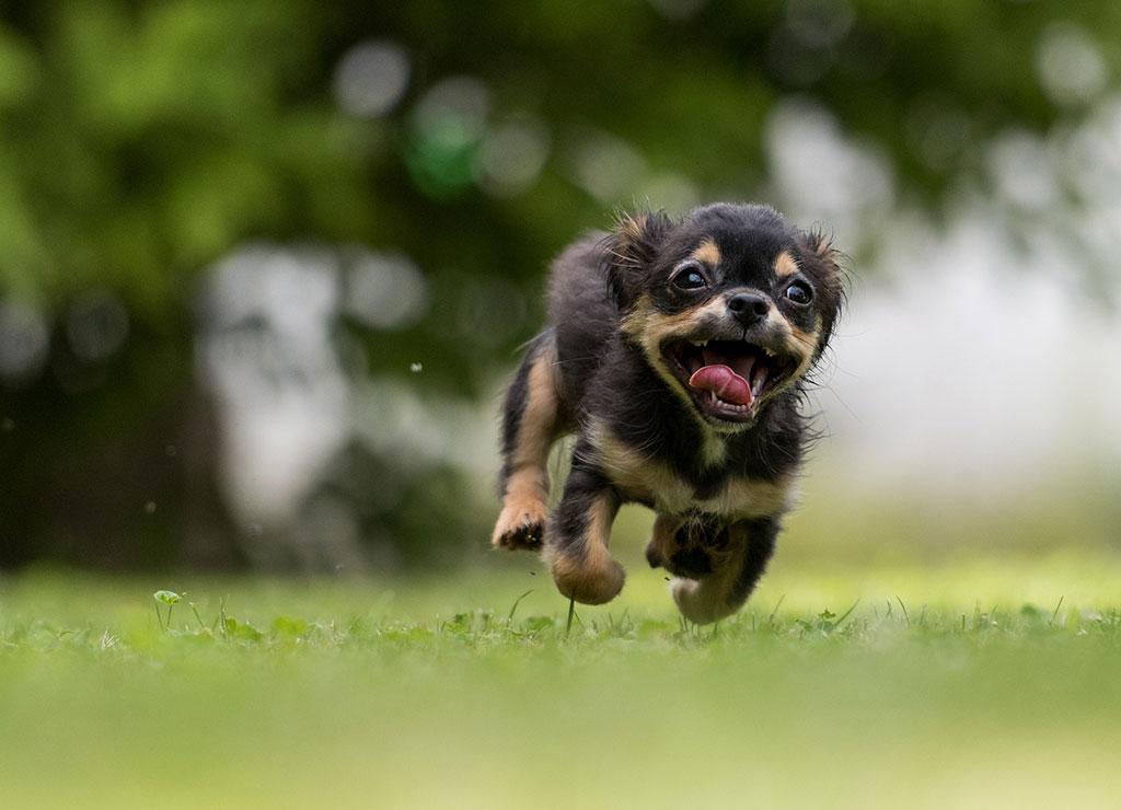 Foto perrito corriendo