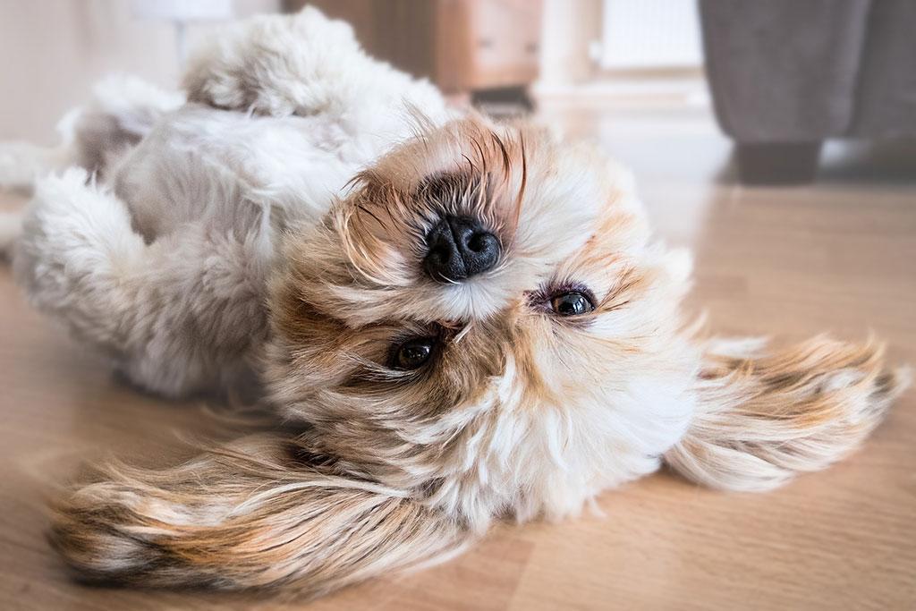 Foto mascota, perro