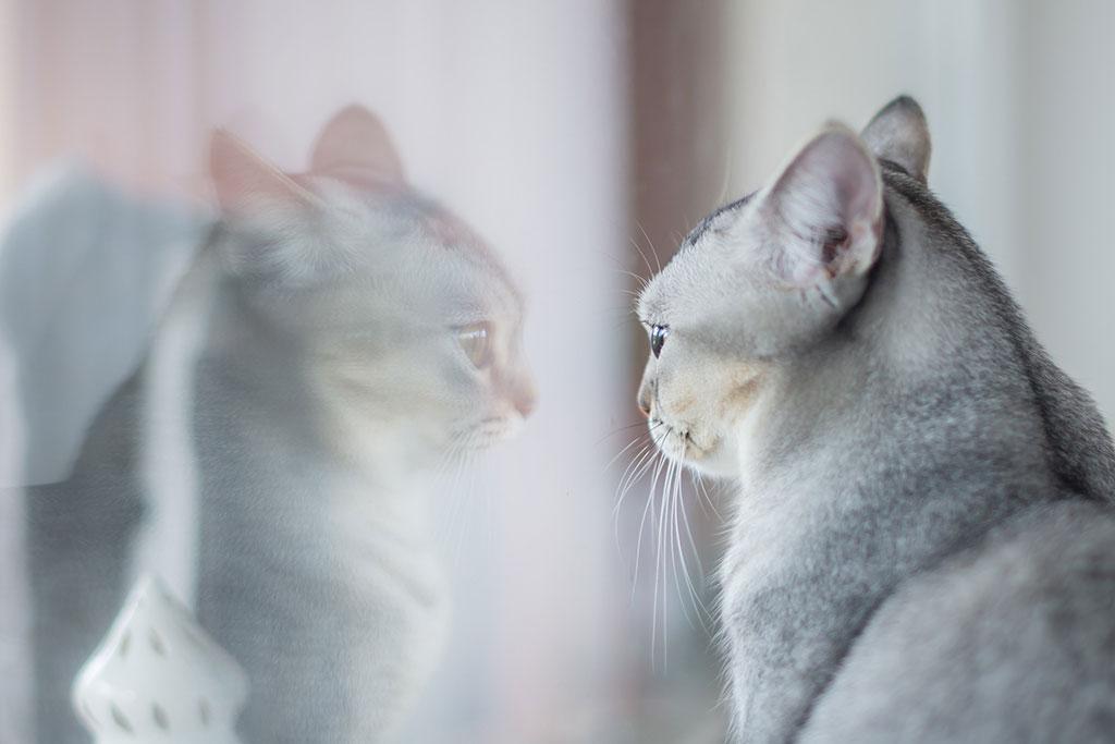 Reflejo cristal gato