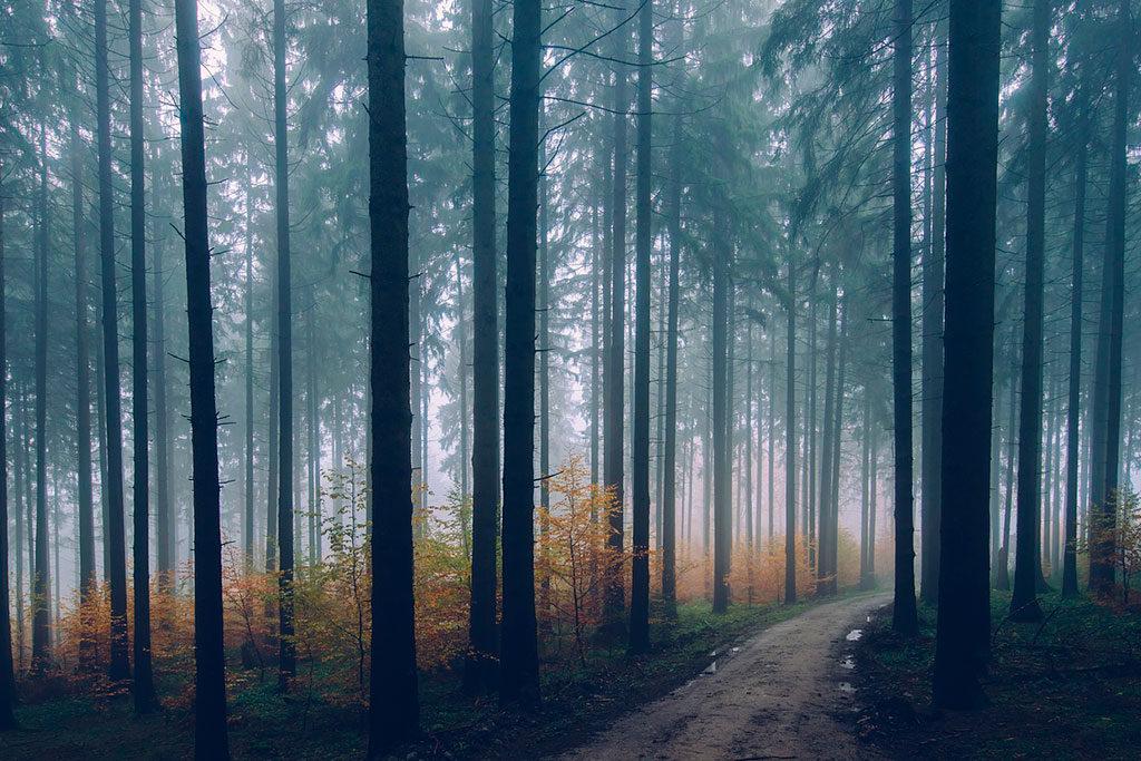 Líneas verticales de los árboles en el bosque
