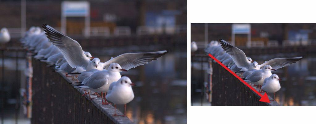 Fotografía palomas, en una valla, simula descender